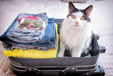 Traveling With Pets: The Tips and Tricks You Need to Know