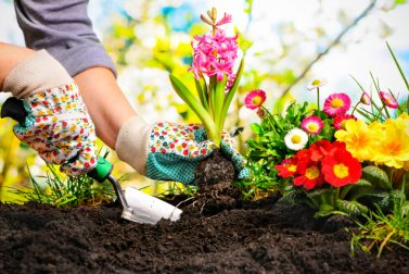 Northeast Landscaping and Gardening Tips