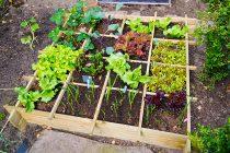 planning a garden