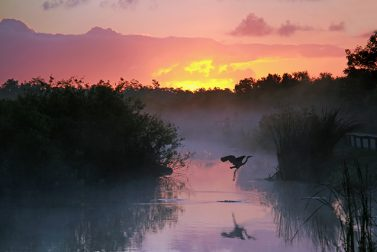 Guide to Everglades National Park
