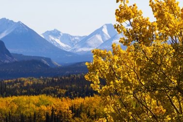 In Alaska, Fiery Fall Foliage is a Breathtaking Contrast to Snow-Capped Peaks