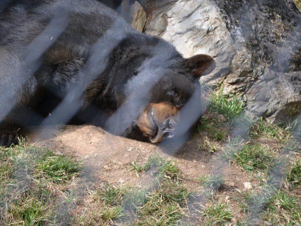 bear in hersheypark hershey pa