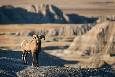 Guide to US National Parks: Deserts and the West