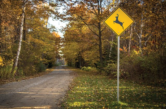 Make Way For Wildlife