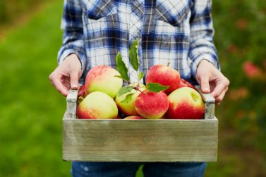 How to Use Your Apple Picking Bounty