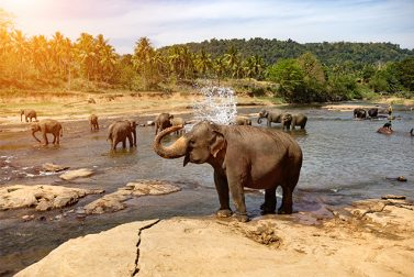 Tour Asia: The Top 10 Sites in Sri Lanka to See on Your Asia Vacation