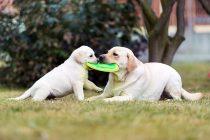 The Best Dog Toys on Amazon