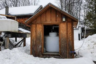 Tap Into New Hampshire Maple Syrup Season