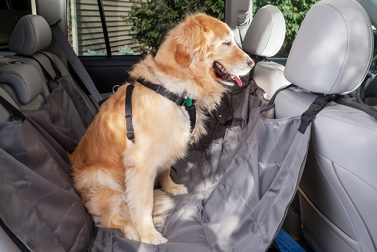 What You Need to Know About Dog Car Restraints