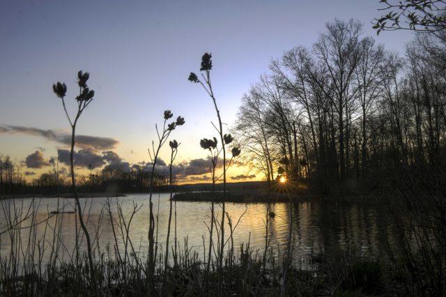 great swamp sunset